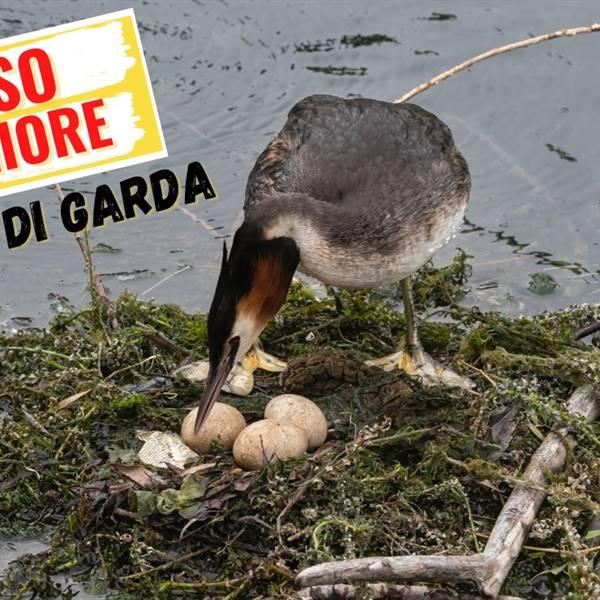 Birdwatching a Riva del Garda